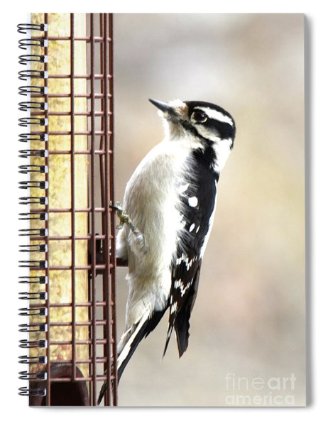 Hairy Woodpecker Spiral Notebook