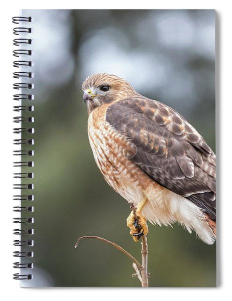 Hal The Hybrid Portrait 3 Spiral Notebook