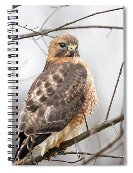 Hals Nicitating Membrane Spiral Notebook