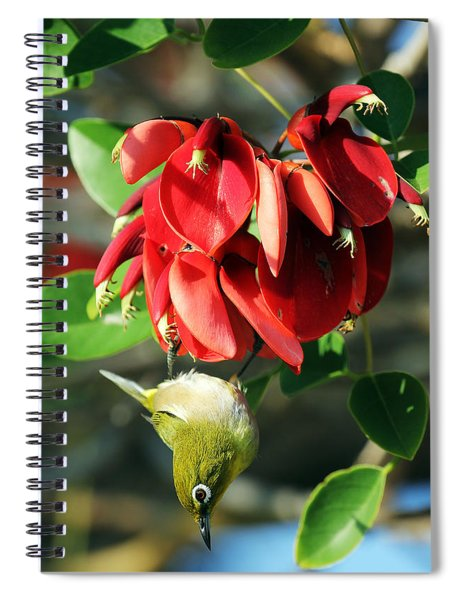 Hanging Japanese Spiral Notebook