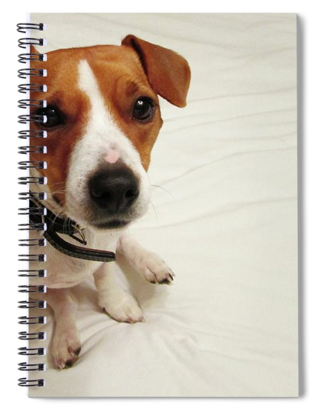 Happiness Is A Cute Puppy Spiral Notebook