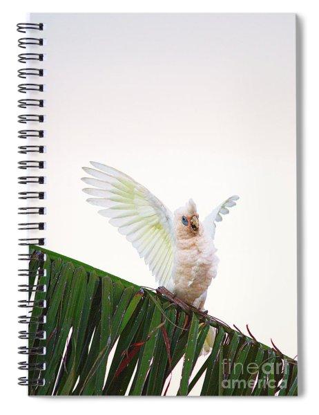Happy Corella 1 Spiral Notebook
