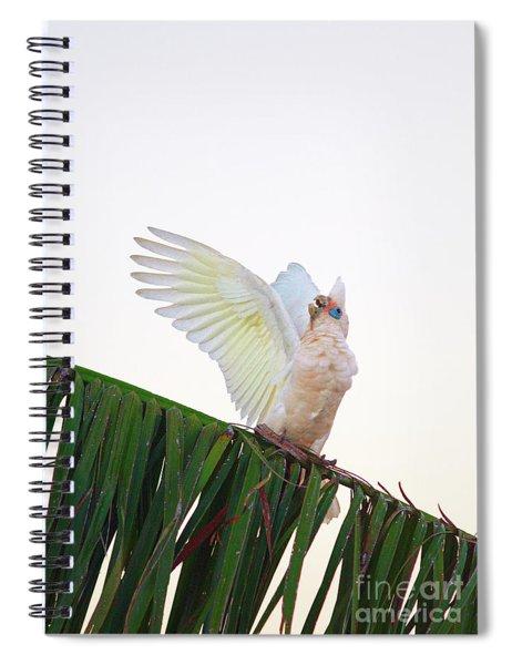 Happy Corella 2 Spiral Notebook