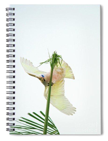 Happy Corella 3 Spiral Notebook
