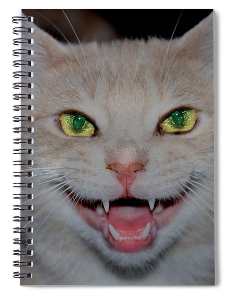 Happy For Spring Cat Spiral Notebook