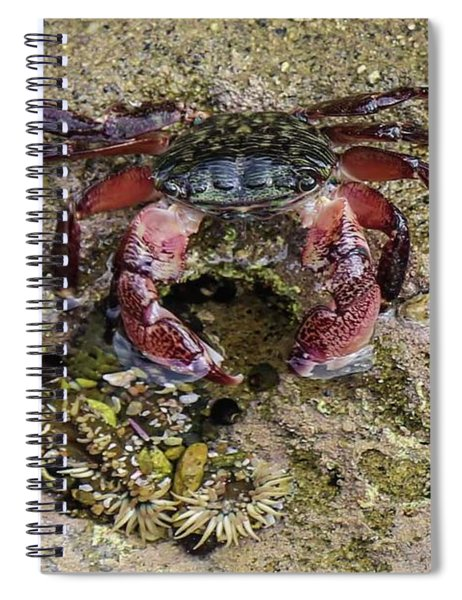 Happy Little Crab Spiral Notebook
