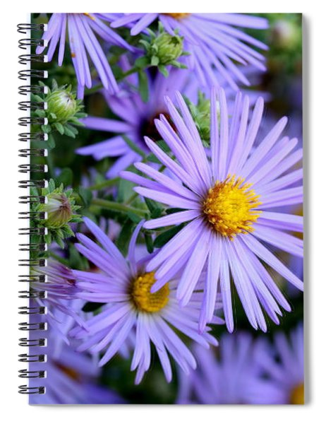 Hardy Blue Aster Flowers Spiral Notebook