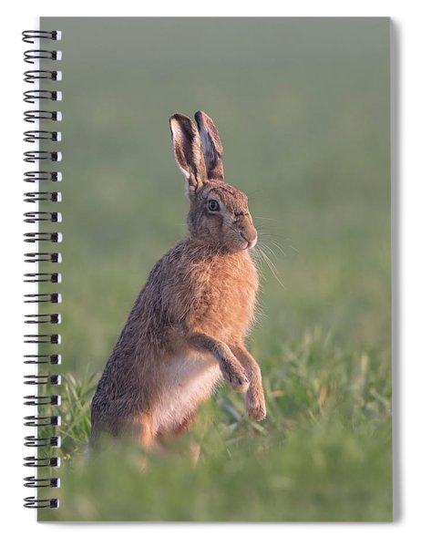 Hare At Dawn Spiral Notebook