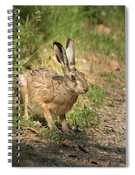 Hare In The Woods Spiral Notebook
