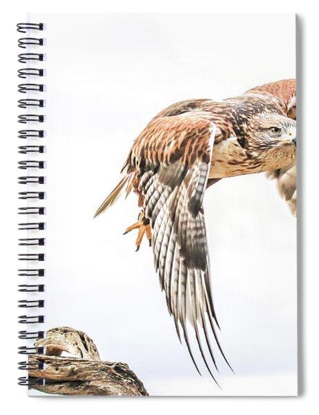 Harris Hawk #1 Spiral Notebook
