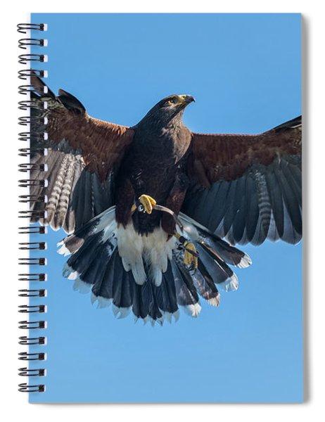 Harris Hawk At Ramona Grasslands Spiral Notebook