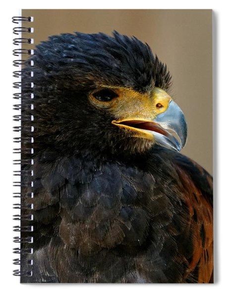 Harris Hawk - Open Mouth Spiral Notebook