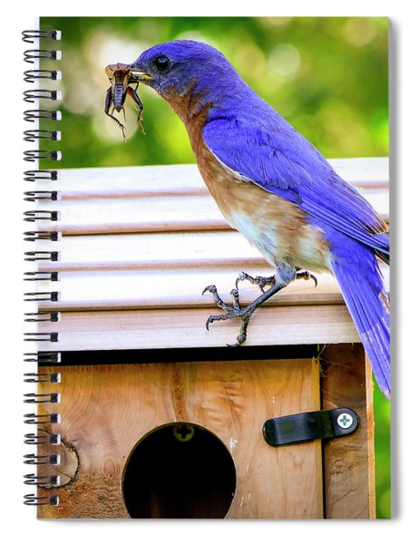 Have A Little Cricket For Breakfast Spiral Notebook