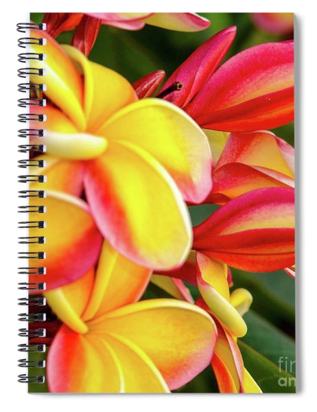 Hawaii Plumeria Flowers In Bloom Spiral Notebook