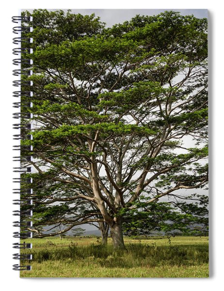 Hawaiian Moluccan Albizia Tree Spiral Notebook