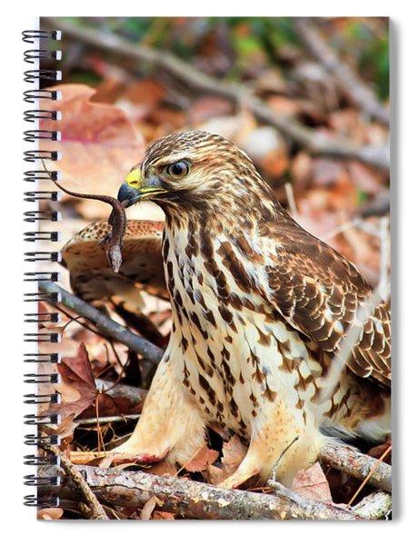 Hawk Catches Prey Spiral Notebook