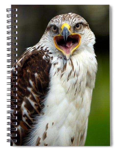 Hawk Spiral Notebook