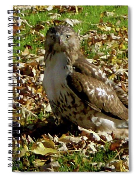 Hawk Falling Leaves Spiral Notebook
