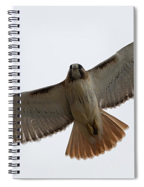 Hawk Overhead Spiral Notebook