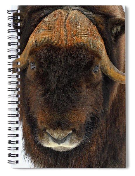 Head Butt Spiral Notebook