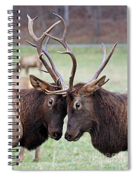 Head To Head Spiral Notebook