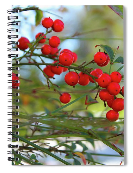Spiral Notebook featuring the photograph Heavenly Bamboo by Alison Frank