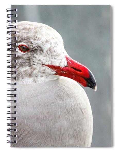 Heerman's Gull Spiral Notebook
