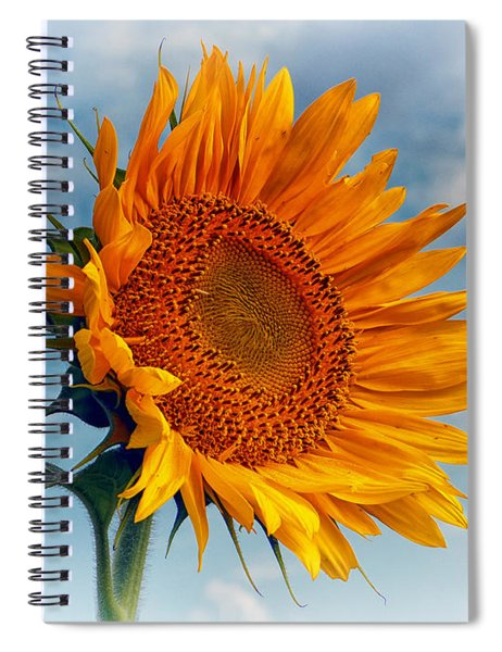 Helianthus Annuus Greeting The Sun Spiral Notebook