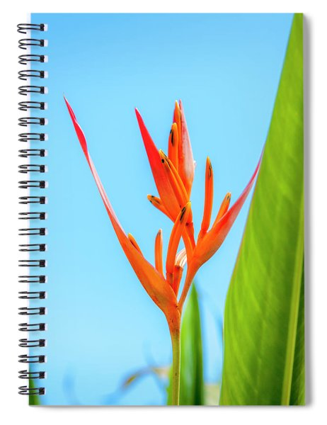 Heliconia Flower Spiral Notebook
