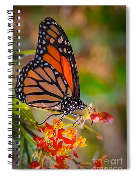 Hello Butterfly Spiral Notebook