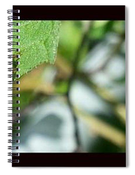Hello Lady Spiral Notebook