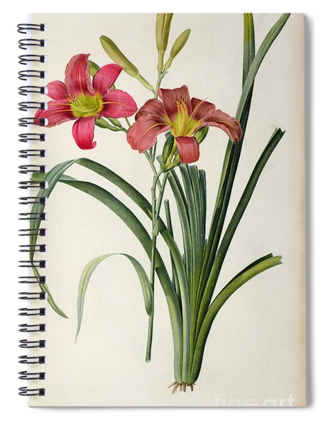 Hemerocallis Fulva Spiral Notebook