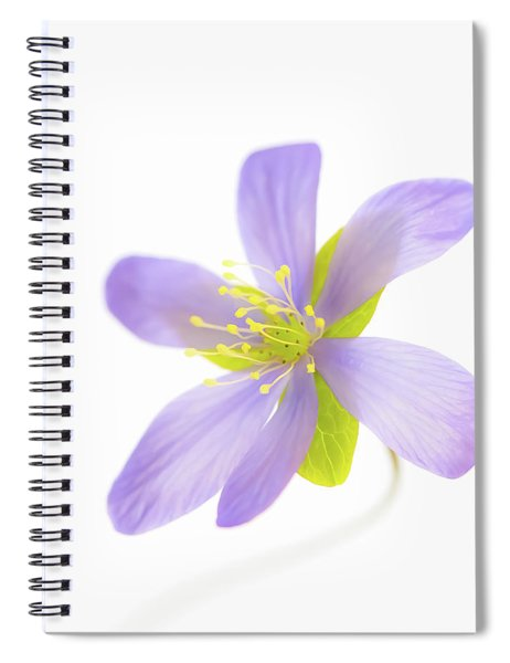 Hepatica On White Spiral Notebook