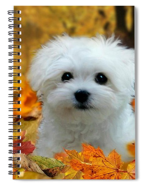 Hermes In The Fall Spiral Notebook