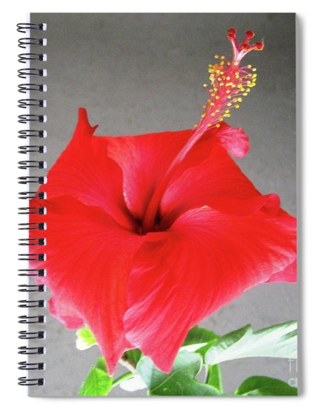 Hibiscus #1 Spiral Notebook