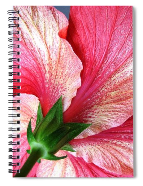 Hibiscus #5 Spiral Notebook