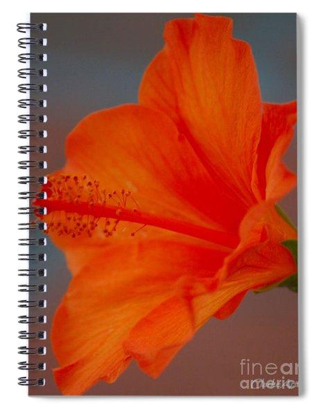 Hot Orange Hibiscus Spiral Notebook