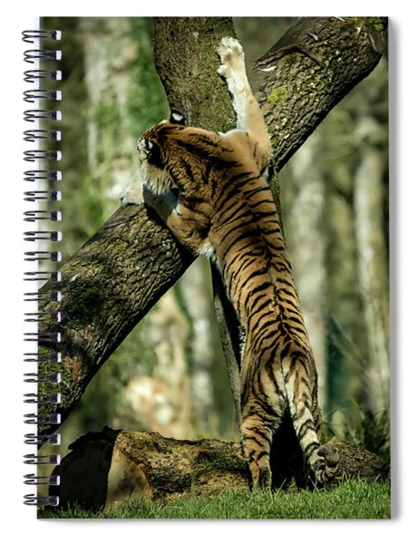 Hide And Seek Spiral Notebook