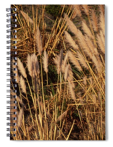 Highway One - Jenner California Spiral Notebook