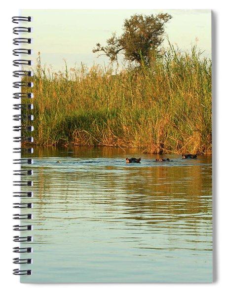 Hippos, South Africa Spiral Notebook by Karen Zuk Rosenblatt