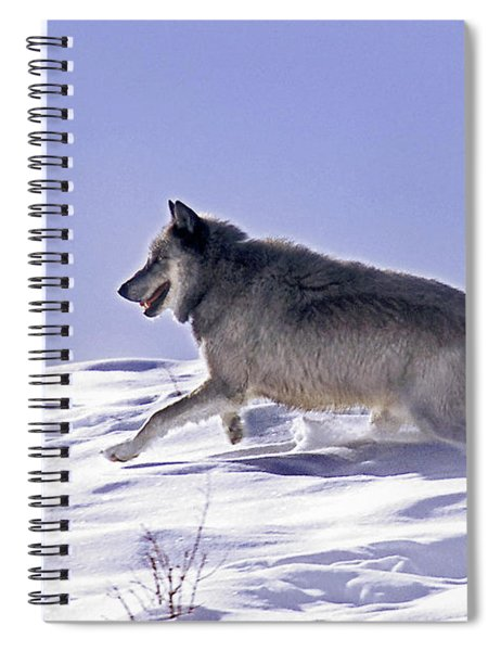 His Majesty Wolf 21m Spiral Notebook