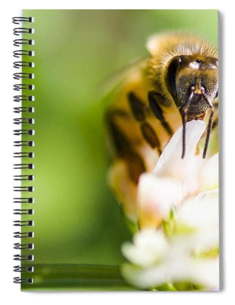 Honey Bee On Clover Flower Spiral Notebook