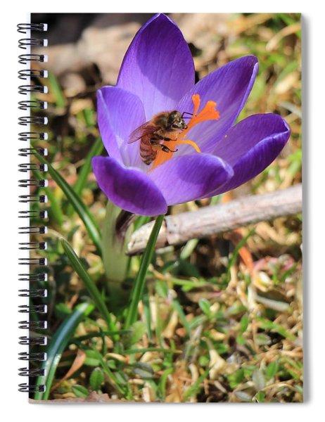 Honey Bee On Crocus  Spiral Notebook