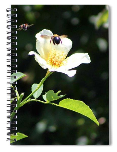 Honey Bees In Flight Over White Rose Spiral Notebook