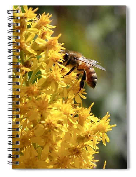 Honeybee On Showy Goldenrod Spiral Notebook