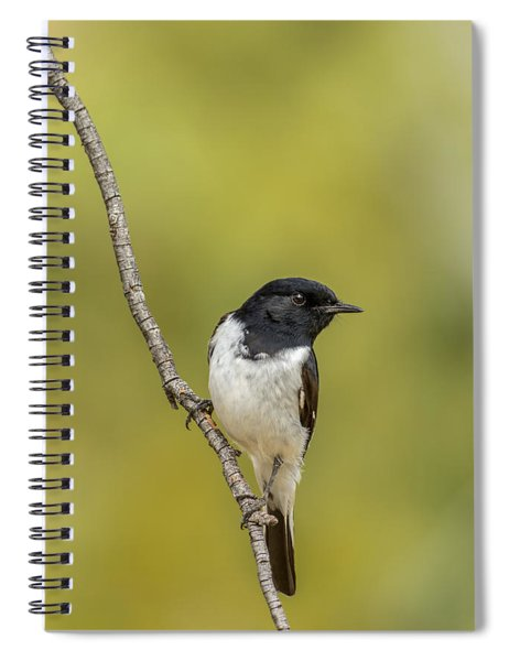 Hooded Robin Spiral Notebook