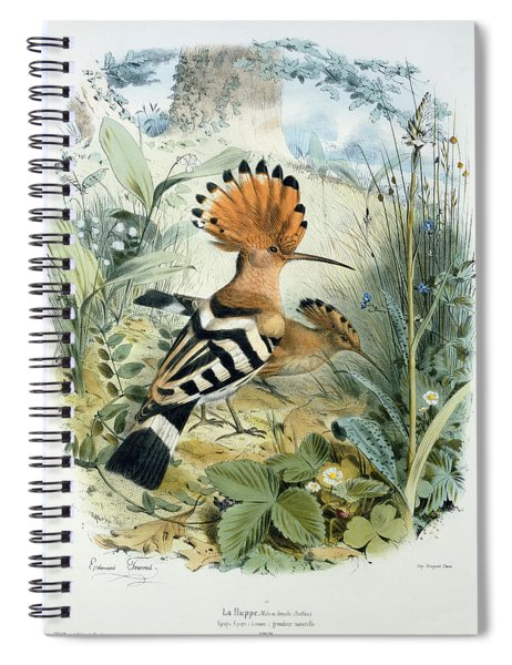 Hoopoe Spiral Notebook