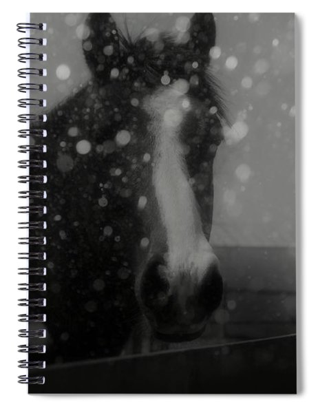 Horse In Falling Snow Spiral Notebook