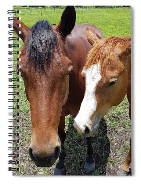 Horse Love Spiral Notebook