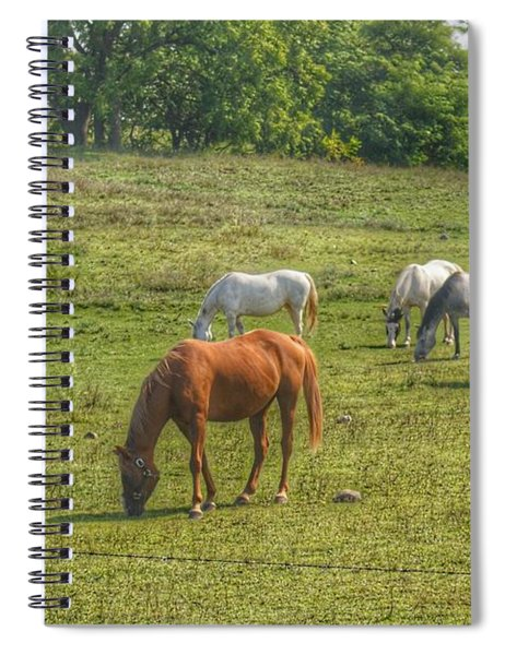 1003 - Horses In A Pasture I Spiral Notebook